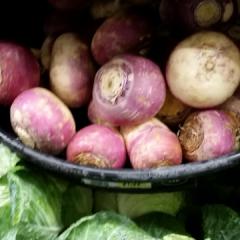 Turnip-Senpai